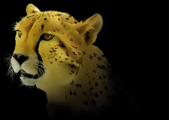 Cheetah on Black Background - Detailed and Realistic Colored Illustration, Vector