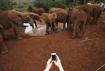 A visitor photographs orphaned baby elephants with a cell phone at the David Sheldrick Elephant Orphanage within the Nairobi National Park, near Kenya's capital Nairobi
