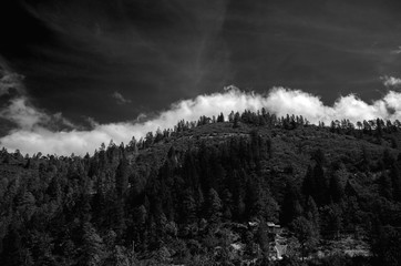 Forest Landscape Clouds Black And White