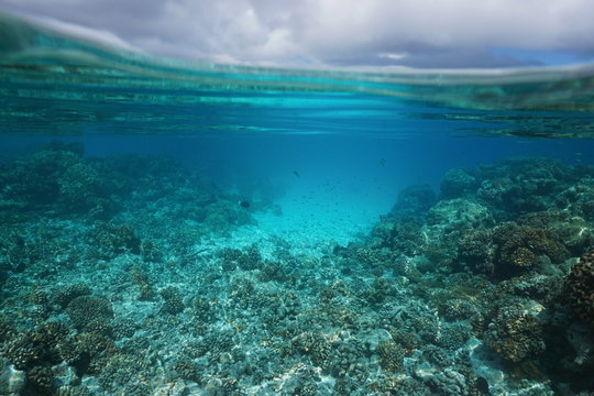 Underwater seascape shallow coral reef and cloudy sky split by waterline, lagoon of Rangiroa, Tuamotus, Pacific ocean, French Polynesia