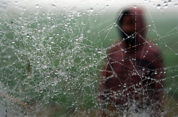 Dew drops form on a spider's web as cold weather continues to sweep north India on the outskirts of Jammu