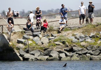 Dorsal fin of wayward dolphin pops up at Bolsa Chica Wetlands in Huntington Beach