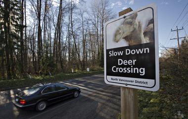 Car passes a sign with a picture of camel warning of an upcoming deer crossing area in North Vancouver