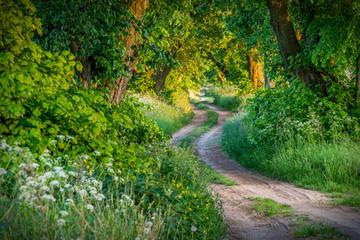 Obraz Aleja drzew lipowych, wiosenny krajobraz - fototapety do salonu