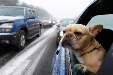 A dog looks out of a car window while stopped in traffic during a snowstorm on I-95 in New Jersey