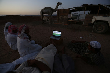 Men watch the 2014 World Cup Group B soccer match between the Netherlands and Australia on a laptop, at a camel market in Daba
