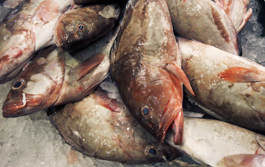 Groupers lay on ice for sale at JMS Seafood, a fish wholesaler in the New Fulton Fish Market in the Bronx section of New York City