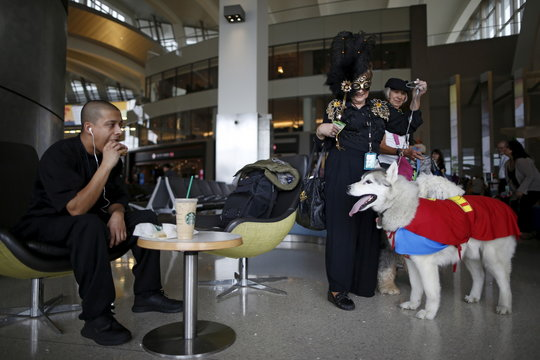 A therapy dog wearing a Superman Halloween costume stares at a man eating a hamburger, while taking part with its owner in a program to de-stress passengers at the international boarding gate area of LAX airport in Los Angeles