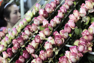 A worker prepares roses for export before the upcoming Valentine's Day at Elite greenhouse in Facatativa