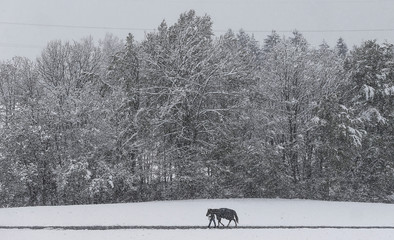 A man walks his horse on a partially snow covered path in Gnadenwald
