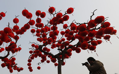 A man takes a picture beneath trees decorated with red lanterns celebrating Chinese new year at a park in Beijing
