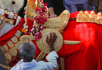 A Shi'ite Muslim man reaches out to touch the gold-ornamentation of sword and shield, placed on a symbolic sacred horse for a good luck, during the religious procession ahead of Ashura, in Karachi,