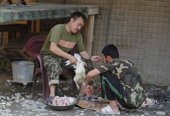 Afghan soldiers slaughter chickens for their troops at Combat Outpost Pirtle King in Kunar