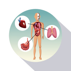 circular frame shading of poster closeup human body with systems vector illustration