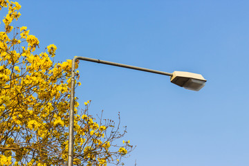 Street lamp with yellow flowers.