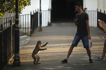 A monkey faces a man as it is photographed at Landport Tunnel in downtown Gibraltar