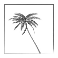 balk and white palm tree california
