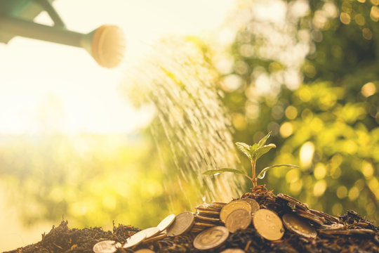 Human watering the money tree . Financial investment concept.