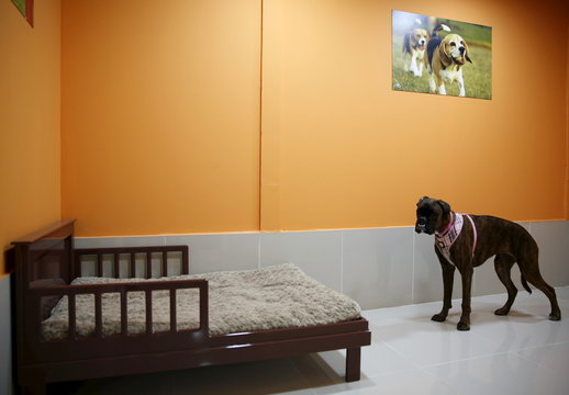 Dog is seen at a room in My Second Home, a newly opened luxury pet resort and spa, in Dubai