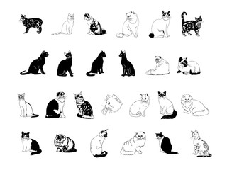 cat collection clipart carton set
