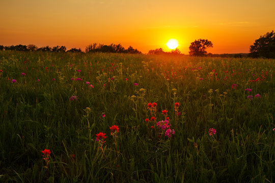 Prairie in the Midwest at sunset with Paintbrush and other wildflowers blooming