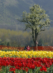 A couple rests on bench inside Kashmir's tulip garden during Baisakhi festival in Srinagar