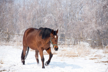 Horse at the winter walk
