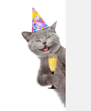 Happy cat in birthday hat holding glass of champagne and peeking from behind empty board. isolated on white background