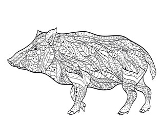 wild boar coloring vector for adults