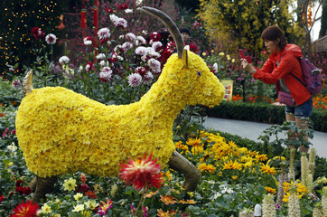 Visitor takes a picture of a floral display of goats made from chrysanthemum blooms ahead of the Lunar New Year at the Gardens by the Bay greenhouse in Singapore