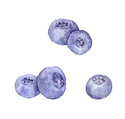 Blueberry berries. Watercolor