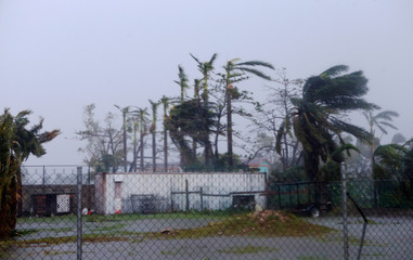 Palm trees buckle under rain after Hurricane Earl hits, in Belize City