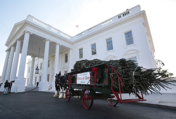 The White House Christmas Tree, a 19-foot Fraser Fir from Jefferson, North Carolina is delivered by horse drawn carriage at the White House in Washington
