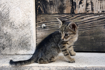 Cute Little Cat looking her Tail