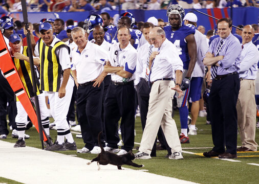 New York Giants staff laugh as a cat runs across the field during their preseason game against the Pittsburgh Steelers in East Rutherford