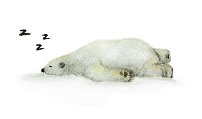 Hand painted watercolor polar bear. Cute sleeping animal design - Sleeping white bear.