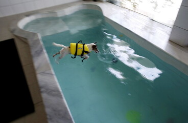 A dog jumps into the swimming pool at the Dog Resort in Sao Paulo