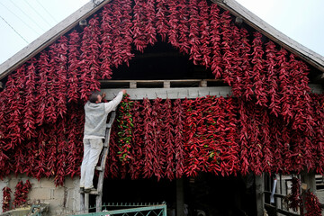 A man hangs a bunch of paprika on the wall of his house to dry in the village of Donja Lakosnica