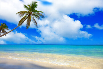 Tropical beach with palms and Caribbean sea .
