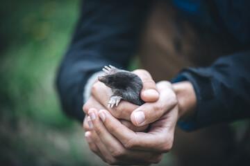 Black mole in man's hands
