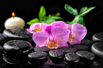 spa setting of blooming twig lilac orchid flower, green leaves with water drops, candle on zen basalt stones