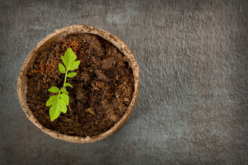 Biodegradable Peat Moss Pot with Tomato seedlings on a textured background