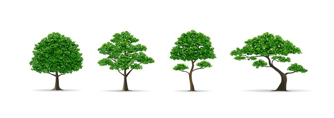 tree set realistic vector illustration