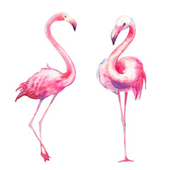 Watercolor flamingo set. Hand painted bright exotic birds isolated on white background. Wild life illustration