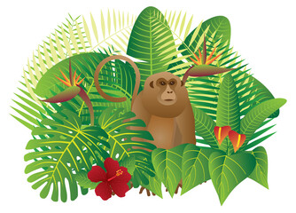 Tropical Rainforest  Jungle Monkey vector Illustration
