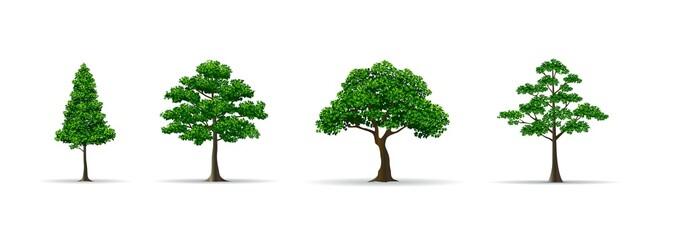 tree set realistic vector illustration Fototapete