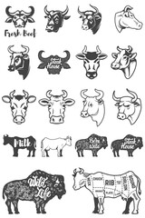 Big set of cow heads and silhouettes. Design elements for logo, label, emblem, sign. Vector illustration