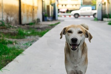 The dog smiled happily. Come to welcome and smile to those who love dogs.