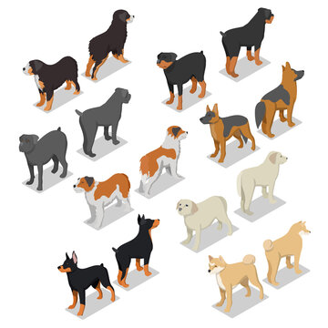 Isometric Dog Breeds with Rottweiler, Retriever and Doberman. Vector flat 3d illustration