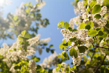 Spring bright flowers